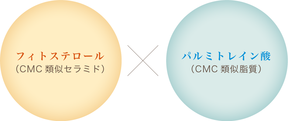 フィトステロール(CMC類似セラミド)×パルミトレイン酸(CMC類似脂質)
